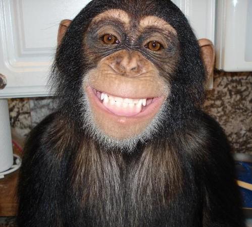 Image Gallery happy chimp