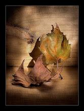 como las hojas que caen al vacío