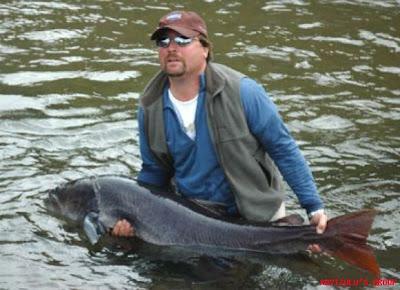 Cria y comercialisacion de peces en estanques for Cria de peces ornamentales