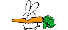 Pon una zanahoria en tu vida