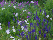 Wildflower Garden~Spring &#39;10