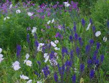 Wildflower Garden~Spring '10
