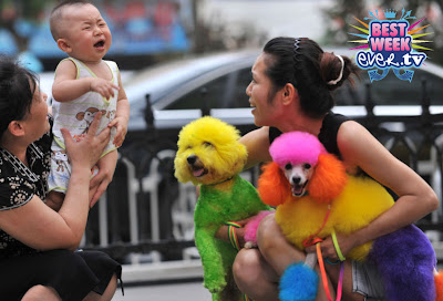 Fashion China on Chinese Trend Setters Have Found A New Passion For Pet Fashion Yes