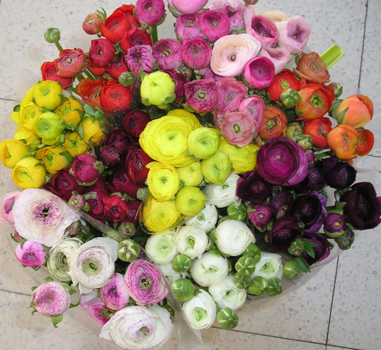 la fleur vintage know your flowers, Natural flower