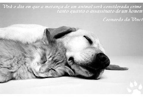Eu amo animais!!