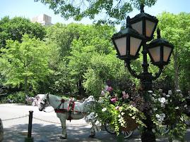 Central Park, N.Y, Maj -09.