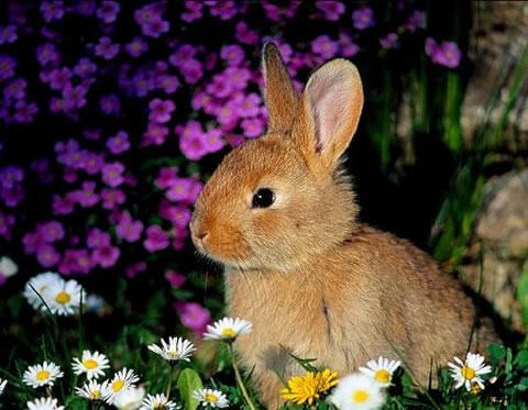 Horóscopo chino 2011 el año del conejo