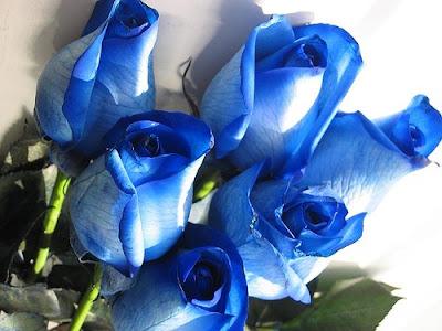اسباب التسمم الغذائي الوقاية التسمم blue_roses_2222.jpg