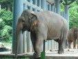 15 min ke Melaka Zoo