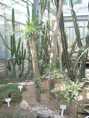 Cactus e piante grasse orto botanico di praga serra for Serra piante grasse