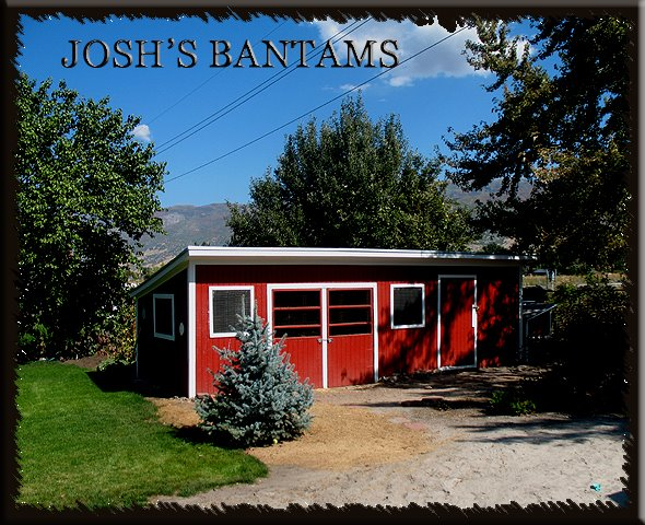 JOSH'S BANTAMS