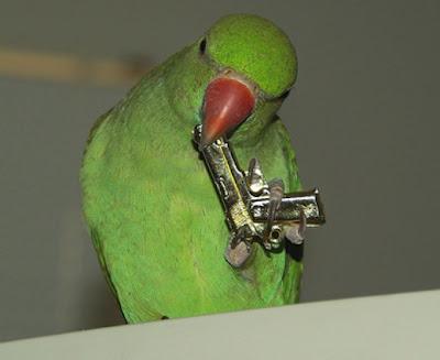 Suicidal Parrot