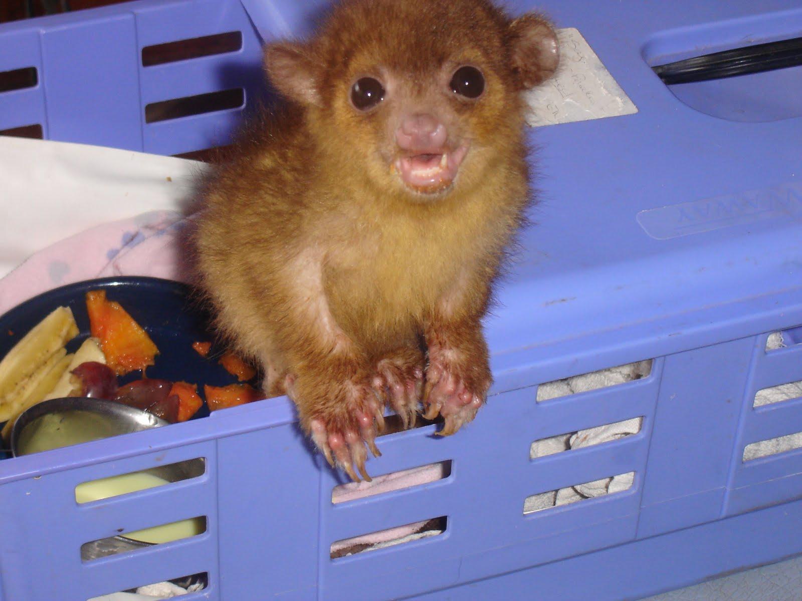 Pin Kinkajous Pets Cages on Pinterest