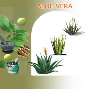Aloe Vera  Nature39;s Miracle
