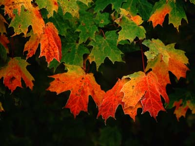 [Fall+Pictures+2.jpg]
