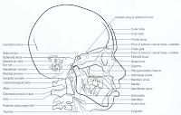 gambar analisis sefalometri