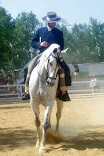 Cavalos das Expressões Tradicionais