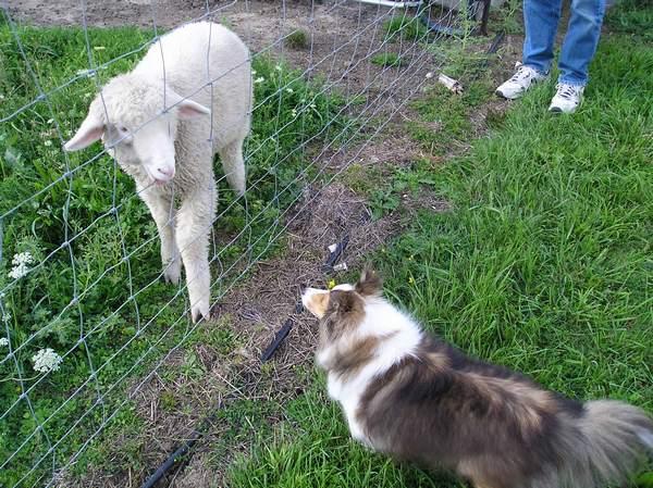 [sheepencounter2.jpg]