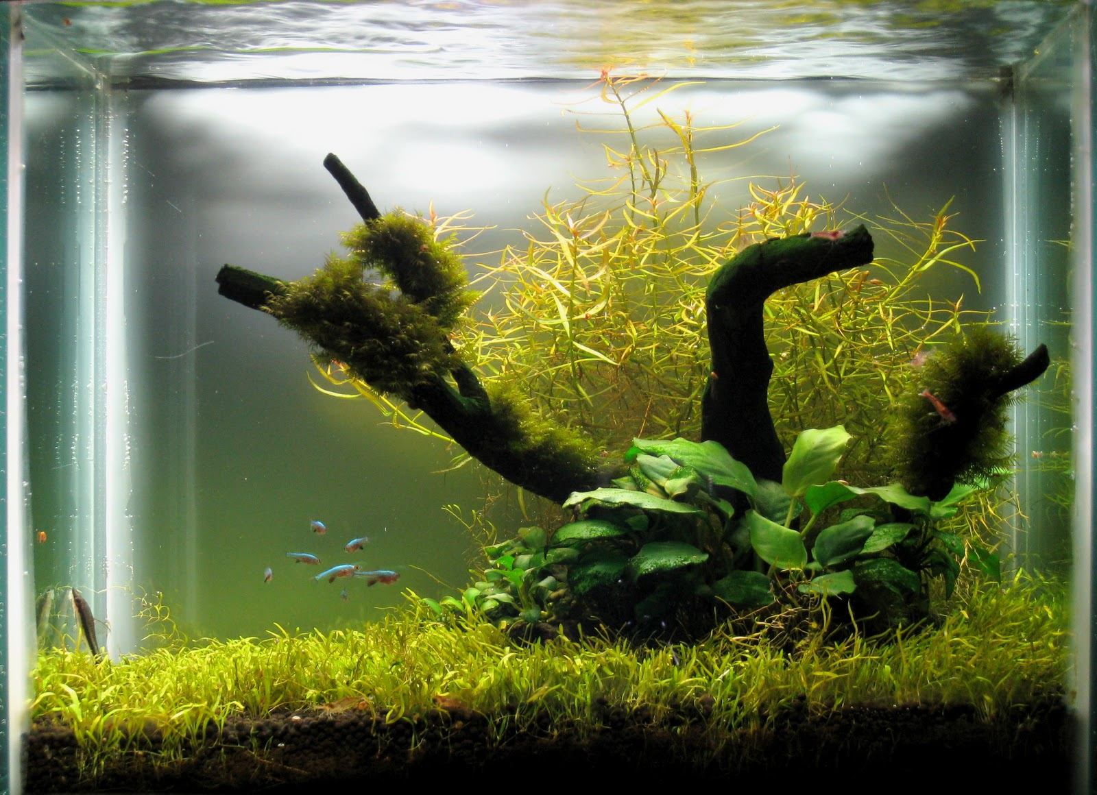 My Aquascaping Layout Design: October 2010