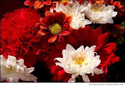 : Birthday Flowers E cards, Birthday Flower Wishes, Nov
