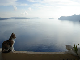 Santorini cats enjoying the view...