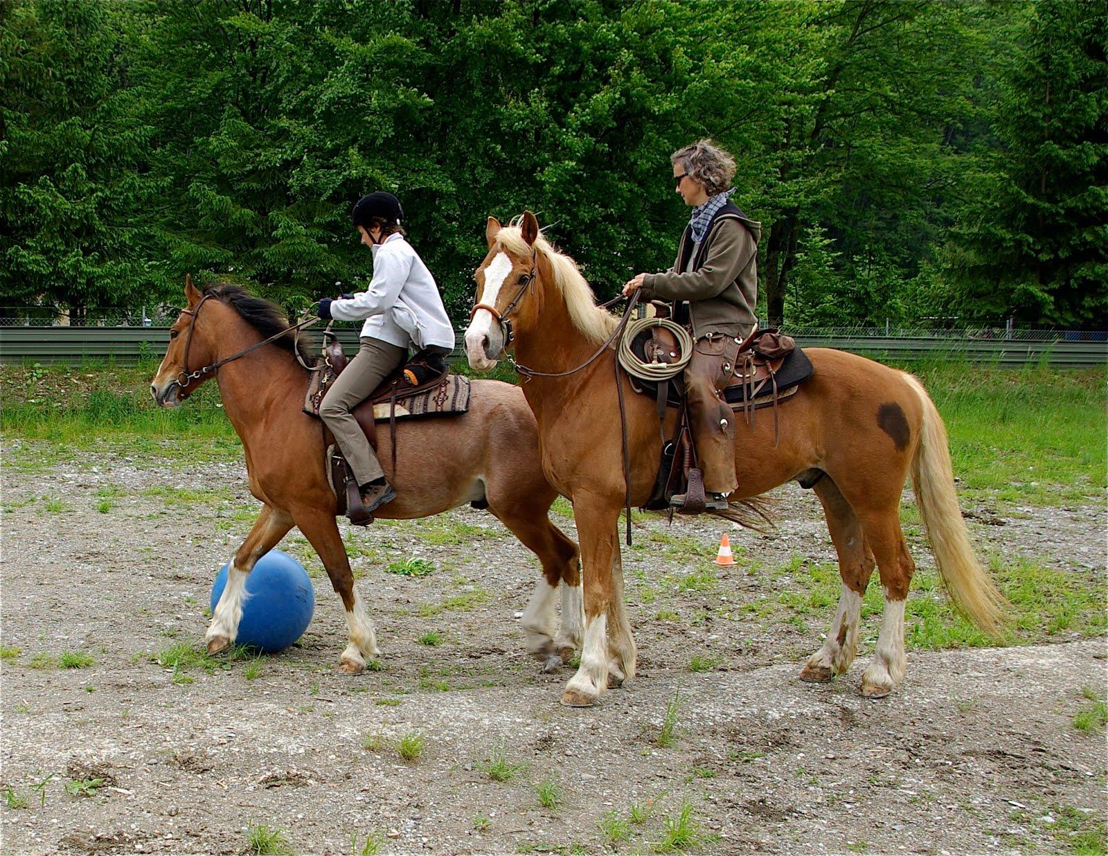 pferd machts mit frau