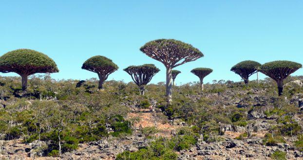 Socotra Island 08