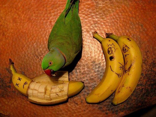 http://2.bp.blogspot.com/_Fzq94YVbHHM/Sx1naKv6gJI/AAAAAAAAnOo/gSkCynpoqu4/s1600/fun_with_food_01.jpg