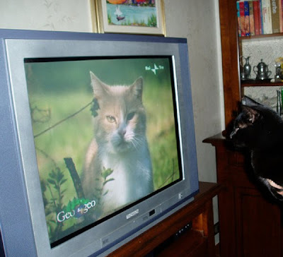 Cat Watching Cat On TV Seen On www.coolpicturegallery.us