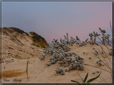 дюны, песок