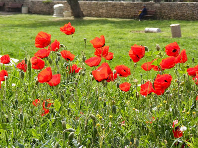 красные цветы, подборка маков