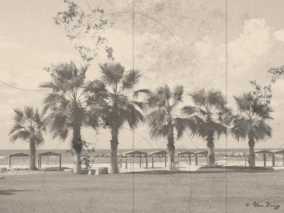 пальмы, старинное фото, ретро