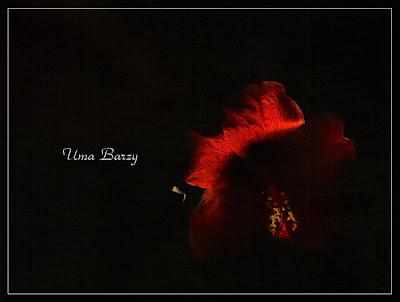 сканограмма, Uma Barzy