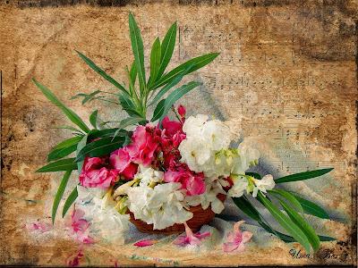 натюрморт с розовыми цветами, Uma Barzy