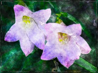 лилия, рисунок из фотографии