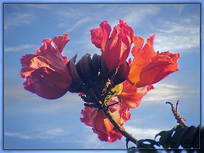 цветы, картинка, фото, flowers
