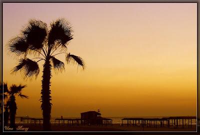пальма на закате