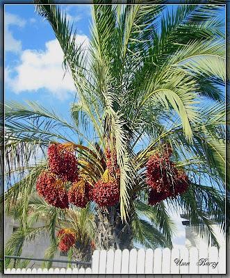 дупло в пальме
