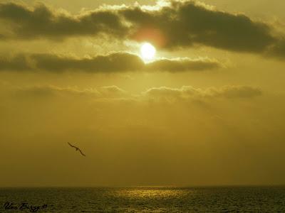 закат, птица на фоне заходящего солнца
