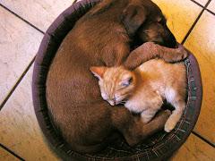 Nierozłączni - Delta i kot Rudzik