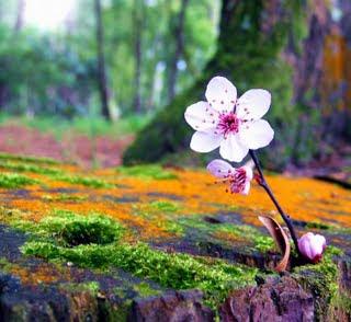 poesias flor: