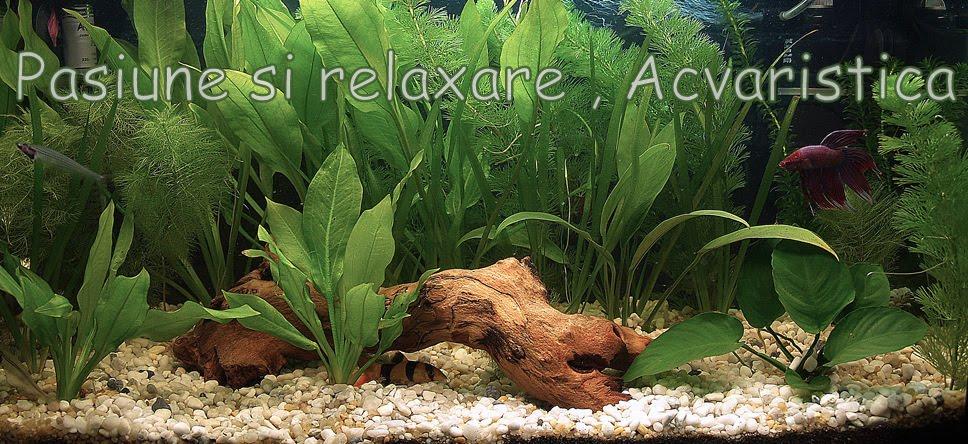 pasiune si relaxare , acvaristica