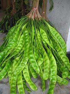 berbagai khasiat daun dan buah salam untuk pengobatan pelauts com