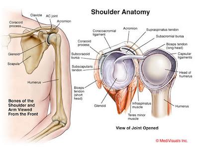 3-D Optimal Performance Guide: 3-D Shoulder: Rotator Cuff ...