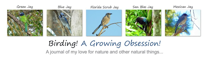 Birding! A Growing Obsession!