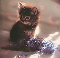 Et si le chat de SChrÔdinger jouait avec des supercodes ?
