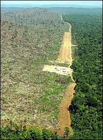 Déforestation illégale de la forêt d'Amazonie dans l'Etat de Pará au Brésil, afin de cultiver du soja. Document Greenpeace.