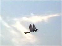 Un ornithoptère. Cet robot volant est grand comme un oiseau et bat des ailes. Document http://www.ornithopter.org/