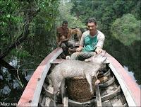 Un pécari géant tué par des chasseurs.