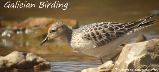 Galician Birding